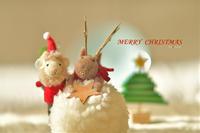 メリークリスマス - お花びより