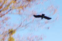 *crow* - It's only photo 2