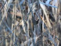 葦の中で - 季節の映ろひ