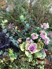 Are you a gardener? - Gardener*s Diary