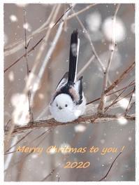 MerryChristmas!!ルリビタキ・シマエナガ・ポインセチアより2020/12/24 Tokyo - むっちゃんの花鳥風月  ( 鳥・猫・花・空・山 )