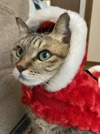 ☆Cherry  Christmas☆2020 - チェリーちゃんねる  第2章