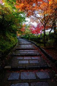 化野念仏寺の紅葉 - ぴんぼけふぉとぶろぐ2
