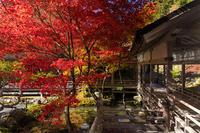 2020紅葉きらめく京都常照皇寺の彩り - 花景色-K.W.C. PhotoBlog
