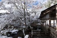 雪の京都2021初雪・常照皇寺(前編) - 花景色-K.W.C. PhotoBlog