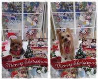 メリークリスマス♪ - わんころ日誌