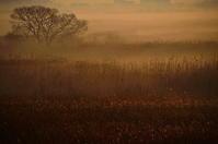 渡良瀬遊水地冬の朝霧 - 風の香に誘われて 風景のふぉと缶