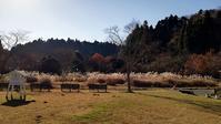 カレンダーのご準備は?/お知らせ - 千葉県いすみ環境と文化のさとセンター