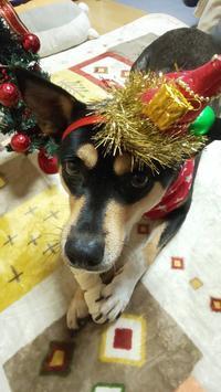 ほっと♪なクリスマスイブ☆ - 化学物質過敏症・風のたより2