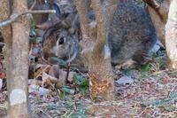 植え込みの中に居た兎さんや、木の上のアカハラさんを - ぶらり散歩 ~四季折々フォト日記~