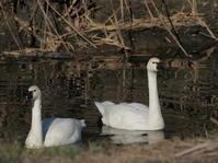 多々良沼 2020.12.22(3) - 鳥撮り遊び