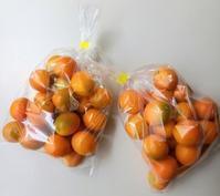 金柑の甘露煮 - La Pousse(ラプス) フローラルのときどき