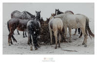 雪の情景 - Part.9 - - 夢幻泡影