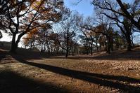 稲荷山公園落ち葉 - ひのきよ