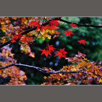 紅葉 - HIGEMASA's Moody Photo