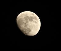 今夜の月と星。 - さいたまの野鳥