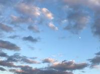 白い月 - マリカの野草画帖