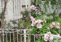 Garden Storyさんにて「実録!バラがメインの庭づくり第12話~」がご掲載頂きました。 -  日本ローズライフコーディネーター協会