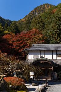 2020紅葉きらめく京都古知谷阿弥陀寺の秋 - 花景色-K.W.C. PhotoBlog
