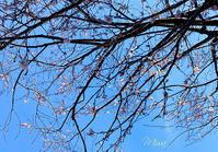 春のきもちで。。。風水吉日 - Miwaの優しく楽しく☆
