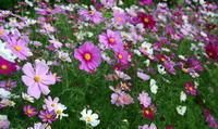 咲き競う - ぎゃらりー竹斎堂