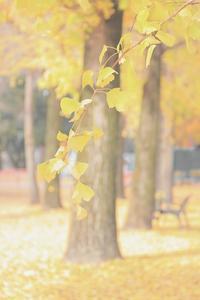 秋の忘れもの - 心はいつもそばにいてね