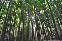 嵯峨嵐山「竹林の小径」の木漏れ日 - ワタシの旅じかん Go around the world!