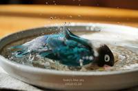 水浴びB.Bの記録(12月20日・Ⅱ) - FUNKY'S BLUE SKY
