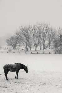 雪の情景 - Part.11 - - 夢幻泡影