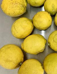安心レモン到着 - きいろいポケット