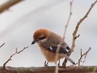 小さな蓮池~カワセミ広場にて12/27 - 青い鳥を探して