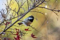 12月の野鳥 - チョウ!お気に入り