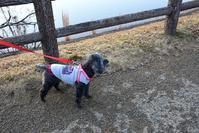 ☆ジジと公園散歩・冬☆ - できる限り心をこめて・・Ⅳ