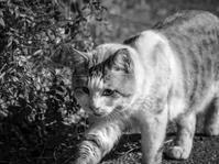 初見の地域猫 - モノクロ写真をアップする!