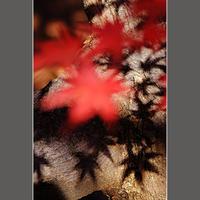 影 - HIGEMASA's Moody Photo