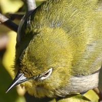 2020年の、鳥納め(葛西臨海公園、鳥類園) - 旅プラスの日記