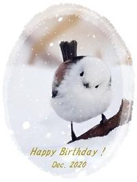 12月生まれの皆さまへバースデーカードをどうぞシマエナガ・エゾフクロウ・シクラメン2020/12/29 Tokyo - むっちゃんの花鳥風月  ( 鳥・猫・花・空・山 )
