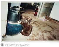 火鉢にあたる猫とストーブにあたる猫 - 好食好日