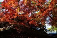御霊神社 - Deep Season