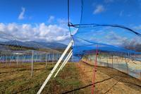 台風並みの強風 - ~葡萄と田舎時間~ 西田葡萄園のブログ