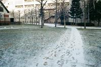 砂糖をまぶしたような芝生と冬の光 - 照片画廊