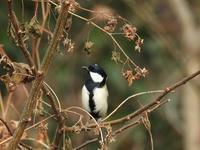 木幡池の野鳥 - 写真で綴る日々