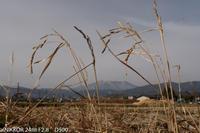 収穫されなかった一株 - ON Line 長野写真展