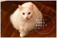 満月と猫 -  one's  heart