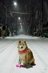 大晦日午前5時半雪 - 写心食堂