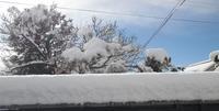 雪の大みそか - めざすはBONSAI いまは鉢植え!