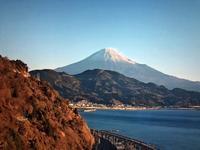 【2020年の大晦日】東京都は1300人超で締め - お散歩アルバム・・紫陽花の頃