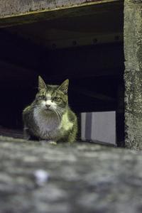 Happy Caturday -向き合う- #36 - jinsnap(weblog on a snap shot)