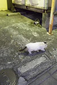 Happy Caturday -街の住人- #37 - jinsnap(weblog on a snap shot)