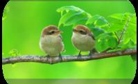 本年もよろしくお願いいたします。 - Life with Birds 3